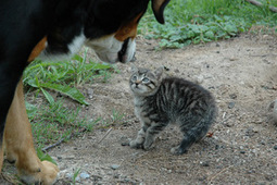 Les chiens ne font pas des chats - French Proverb   French and France   Scoop.it