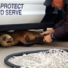 Sea Lions Have Seizures Caused by Harmful Toxics