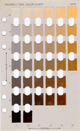 "How Do You Like Your Coffee ""Color""? 