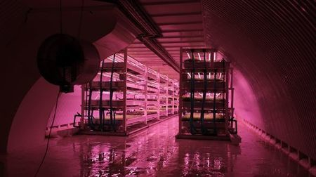 Growing Underground farms greens in forgotten tunnels below London | Stu Robarts | GizMag.com | @The Convergence of ICT & Distributed Renewable Energy | Scoop.it