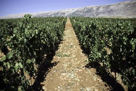 French wine expert lauds the Lebanese terroir / Dailystar | Charliban Lebnen | Scoop.it