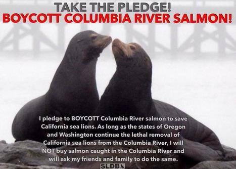 Take the Pledge: Boycott Columbia River Salmon | GarryRogers NatCon News | Scoop.it