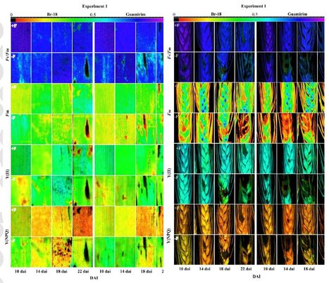 Effects of blast on components of wheat physiology and grain yield as influenced by fungicide treatment and host resistance | Crosstalks in Plant-microbes interactions | Scoop.it