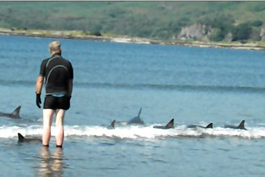 19 #Trapped #Dolphins rescued by Nottinghamshire family, #Scottish beach! via @sharontrys <thxu x | climate change | Scoop.it