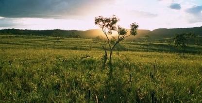 Protecting the Brazilian Cerrado | The Nature Conservancy | Tropical Grassland | Scoop.it