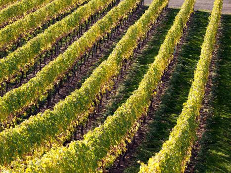 Wealthy Chinese investors eschew residential real estate for hotels, wineries, mineral water in British Columbia | Chine et Vins Français: Une affaire de goût en devenir | Scoop.it