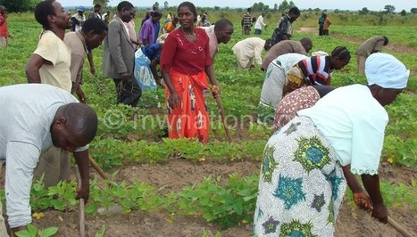 Malawi, others to launch CSA Alliance Forum   NEPAD CAADP: Agriculture, Food Security and Nutrition in Africa   Scoop.it