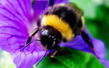 Bees and the crops they pollinate are at risk from climate change, IPCC report to warn - Telegraph | Climate change challenges | Scoop.it