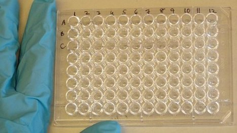 Zika virus shows importance of cell culture for viral research | Cell Line Contamination | Scoop.it