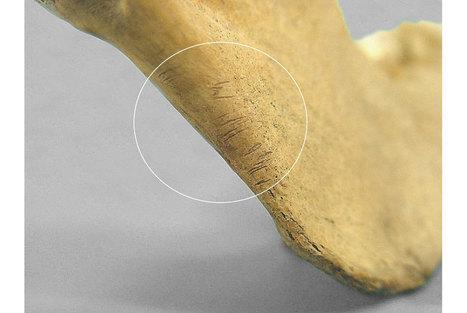 Fragments of human bones help investigators to determine that Mexicas practiced cannibalism   Art Daily   Kiosque du monde : Amériques   Scoop.it