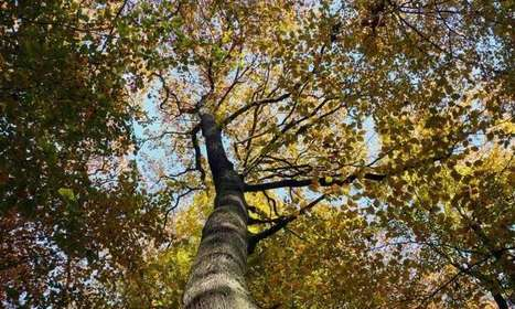The influence of increased atmospheric CO2 concentration on European trees | GarryRogers Biosphere News | Scoop.it