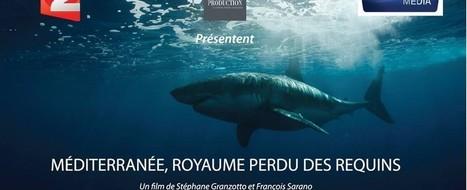 Un documentaire des plus attendus sur les requins de Méditerranée ... | Ocean | Scoop.it
