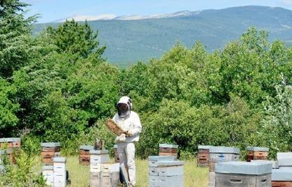 Les apiculteurs bourdonnent dans les champs et les villes | Economie Responsable et Consommation Collaborative | Scoop.it