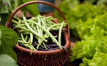 Balancing the Scales: Food 'Sovereignty' and Food Safety | ECONOMIES LOCALES VIVANTES | Scoop.it