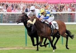 +de 1.500 chevaux de course menacés par une hausse de la TVA | www.latribune.fr | Trotting club | Scoop.it