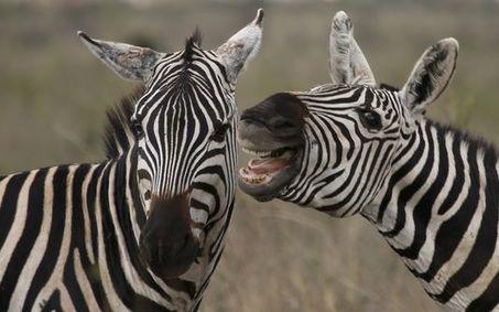 Les grands herbivores menacés par le braconnage et les trafics | Veille développement durable | Scoop.it