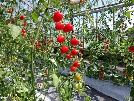 Water-saving farming tech says 'sayonara' to soil- Nikkei Asian Review | Research Biotechnologies | Scoop.it