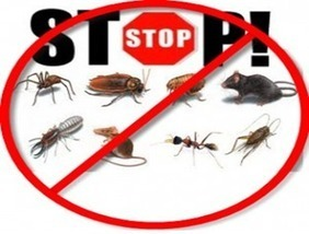 Go Natural for Your Pest Control | Healthcare Marketing | Scoop.it