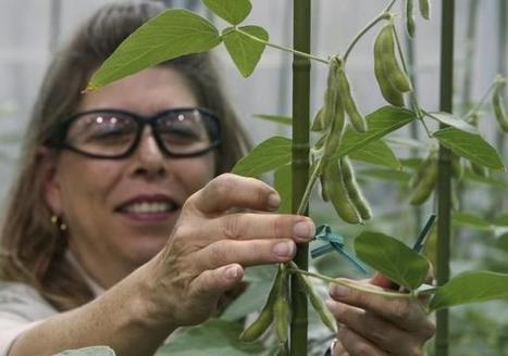 Exclusive: Pivoting after failed Syngenta bid, Monsanto to build big data business | Reuters | Asset Management Engineering | Scoop.it