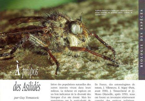 À propos des Asilidés | EntomoScience | Scoop.it