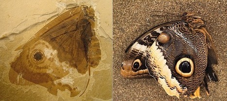 Discovery of 'Jurassic butterflies' | Science and Global Education Trends | Scoop.it