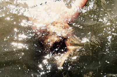 SHXCXCHCXSH return for second album on Avian | DJing | Scoop.it