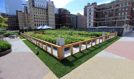 Urban Farming On Rooftops hits New York | Sustainable Urban Agriculture | Scoop.it