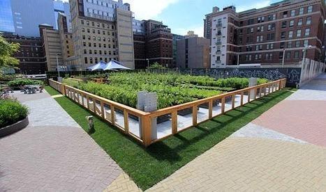 Urban Farming On Rooftops hits New York | ECONOMIES LOCALES VIVANTES | Scoop.it
