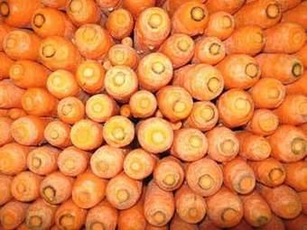 Las zanahorias desechadas sirven para producir bioetanol | Ciencia y Tecnología Iberoamericana | Scoop.it