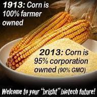Syngenta and Animal Deaths | GMOs | Scoop.it