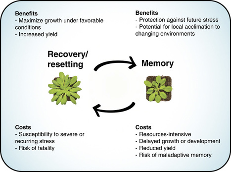 Reconsidering plant memory: Intersections between stress recovery, RNA turnover, and epigenetics | plant cell genetics | Scoop.it