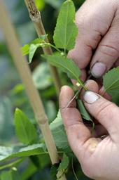 Maine-et-Loire : se former, après la saison, dans les cultures végétales spécialisées   ANEFA   metiers agriculture   Scoop.it