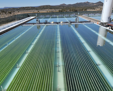 Microalgae-based biofuel can help to meet world energy demand | Sustainable Technologies | Scoop.it