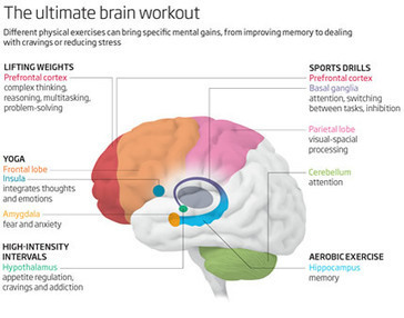 Five Different Physical Exercises That Affect The Brain In Very Different Ways | Santé ! | Scoop.it