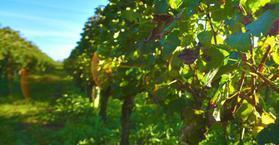 Sainte-Foy rejoint l'Union des Côtes de Bordeaux - WineAlley   Communication, Marketing Web&Vin   Scoop.it