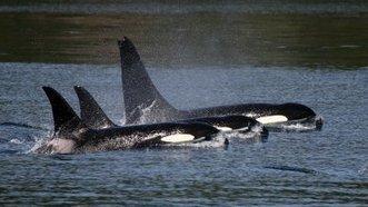 Free Corky   Animals in captivity - Zoo, circus, marine park, etc..   Scoop.it