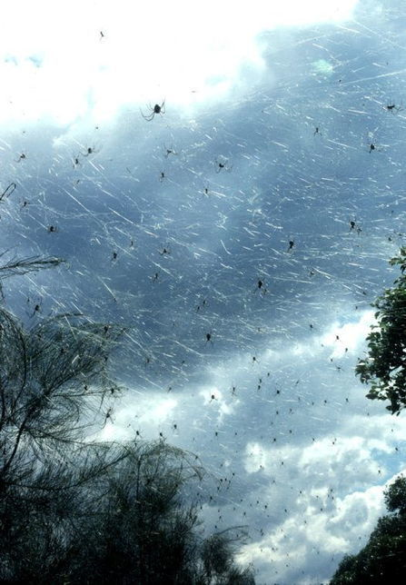 Australian Town Completely Covered in Cobwebs after Millions of Spiders Rain from the Sky | Strange days indeed... | Scoop.it