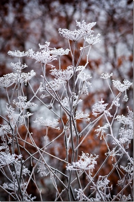 How to Photograph Plants in Winter | Photography Tips & Tutorials | Scoop.it