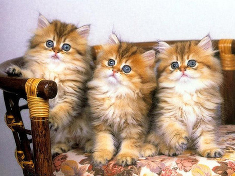 70 Cutie Baby Animals Bring You a Good Mood | The Design Inspiration | top 10 | Scoop.it