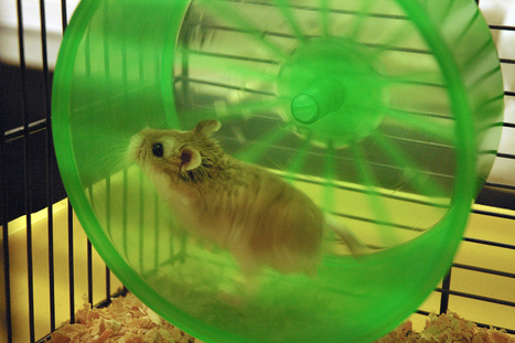 Hamster power to help solve energy crisis? [videos] | Energy crisis in Australia | Scoop.it