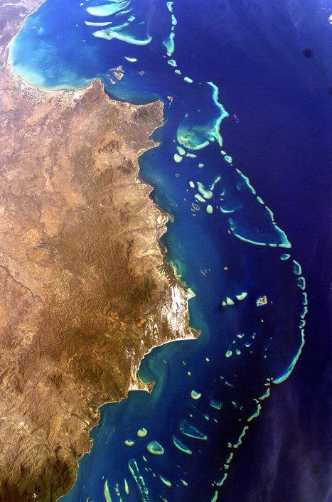 Si vous rêviez de voir la Grande Barrière de corail, c'est maintenant ou jamais : nous sommes en train de l'achever | Ca m'interpelle... | Scoop.it