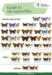 Butterfly Conservation - Your Guide To UK Butterflies | Nature conservation | Scoop.it