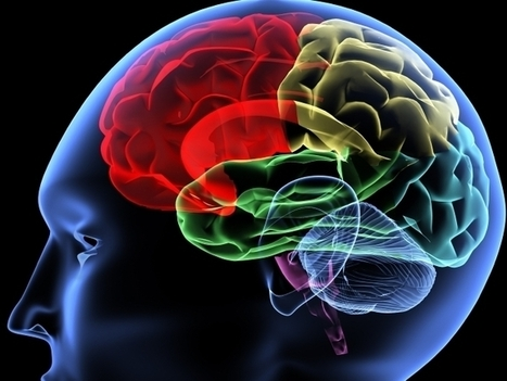 Addicts' Brains May Be Wired At Birth For Less Self-Control | Psychology and Brain News | Scoop.it