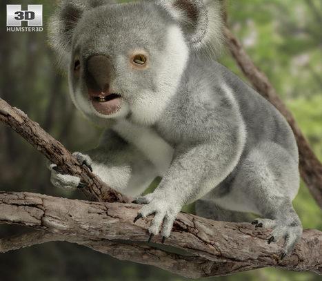 3D model of Koala High Detailed Rigged   3D models   Scoop.it