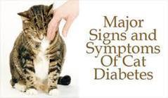 How To Spot Diabetes In Your Cat Early For The Best Outcome | Catnip Daily | Scoop.it