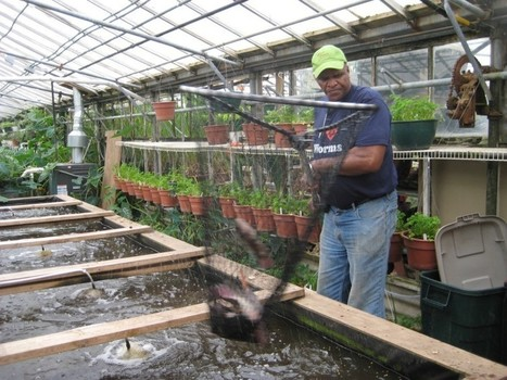 GROWING POWER GROWS FISH, VEGGIES, AND COMMUNITY WITH AQUAPONIC FARM | Aquaculture | Scoop.it