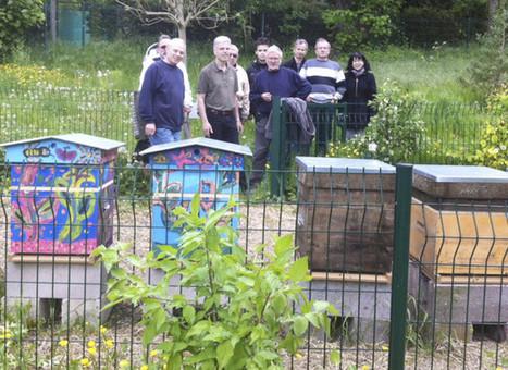 L'arboretum, un refuge pour les abeilles | Arboretums, parcs et jardins,jardin botanique | Scoop.it