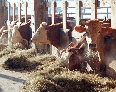 Dänemark: Weniger Delikte bei Biobauern | FilFallt | Scoop.it