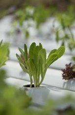 Aquaponics in the spotlight at CA State Fair   Evo Farm   Vertical Farm - Food Factory   Scoop.it