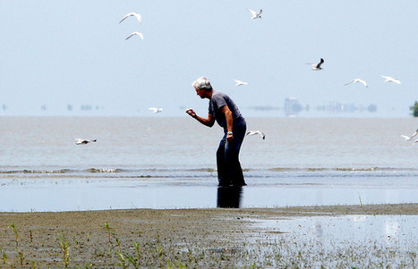 The Economic Case for Restoring Coastal Ecosystems - Center For American Progress | Social Entrepreneurship | Scoop.it